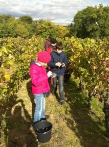 Поїздка у Францію. Традиційне французьке ремесло — виноробство